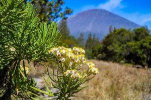 Pendaki Petik Edelweis, Aturan di Jalur Turun Gunung Lawu akan Diperketat Pemkab Karanganyar