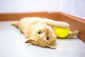 Rumah Difabel Meong: Soloraya Darurat Penembakan Kucing!