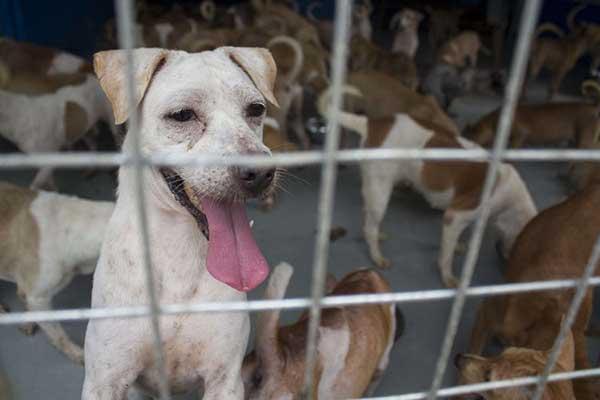 Pemkab Sragen Didesak Untuk Menyetop Perdagangan Daging Anjing