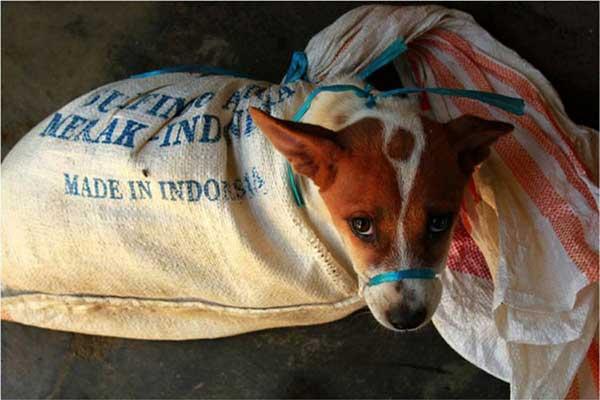 Gibran Diminta Tutup Warung Kuliner Anjing di Solo