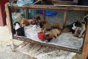 Respon Anggota DPRD Solo Soal Praktik Jual Beli Daging Anjing di Solo